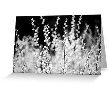 Macro, Spring Leaves, Lindinny Woods, Scottish Borders Greeting Card