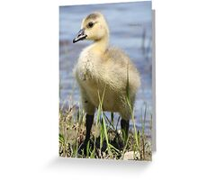 Dignified Greeting Card
