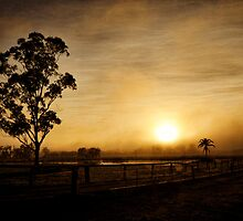 Morning Mist by Karen Willshaw