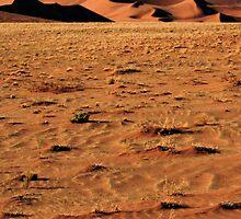 Closeup Sand, Namibia by Carole-Anne