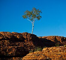 One tree Rock by Ruben D. Mascaro