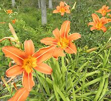 Tiger Lily by ack1128