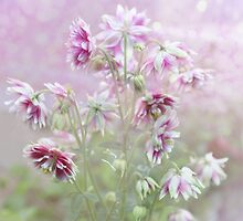 Columbine beauty by Elaine  Manley