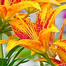 Flamed Lilies and Droplets of Water by Yannik Hay