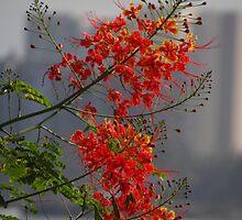 Flowers Against Concrete Desert - Flores Contra Desierto De Concreto by Bernhard Matejka