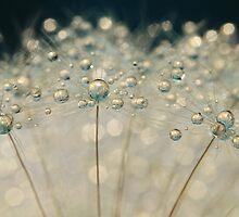 Midnight Blue Dandy Sparkles by Sharon Johnstone