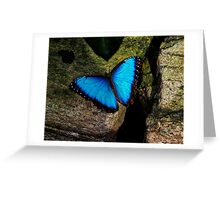 Butterfly Extraordinaire  Greeting Card