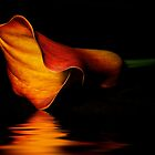 Calla Lilly by Fern Blacker