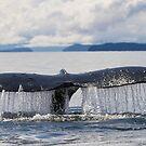 Whale Tail by Gina Ruttle  (Whalegeek)