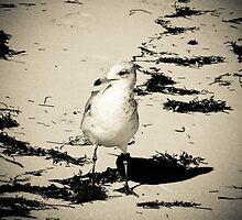 Shore bird by Tatianaphoto