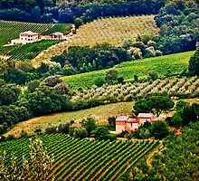 Vineyards and Olive Orchards by Lynnette Peizer
