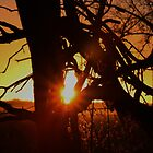 Dead Tree Sunset in Kansas by ROBERTDBROZEK
