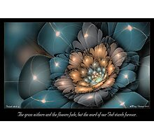 Flowers Fade Photographic Print