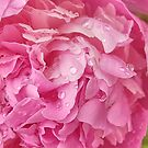 Peony After Rain by Elizabeth Bennefeld