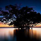Runaway Tree by Ian  Clark