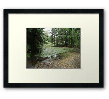 Lake, Rotary Park Framed Print