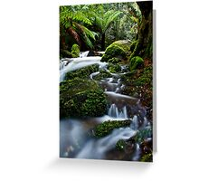 Gem Of The Forest Greeting Card