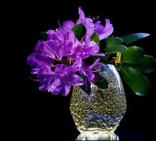 Purple azalea  by torishaa