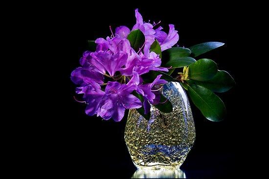 Purple azalea  by torishaa