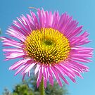 Pink flower against blue sky by ©The Creative  Minds