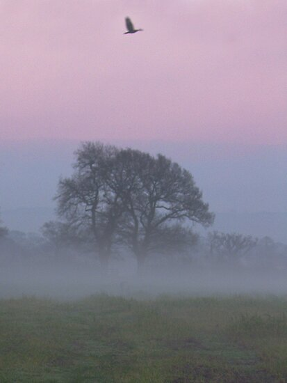 Misty Morning (1), Cheshire by KUJO-Photo