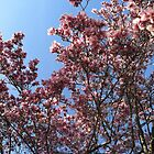 A magnolia in Red Hook by Xennifer