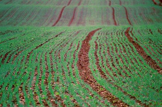 Green Field, Cheshire by KUJO-Photo