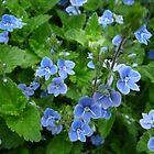 Blue is Beautiful by HELUA