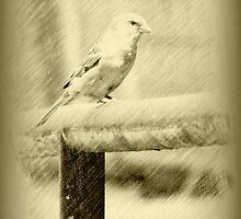 Feathered Beauty © by Dawn M. Becker
