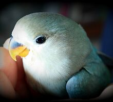 Pippy the Young Lovebird by AuntDot