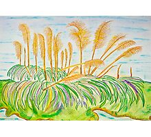 Pampas Grass on the Creek Photographic Print