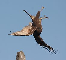 Talon Quest by Phillip Weyers