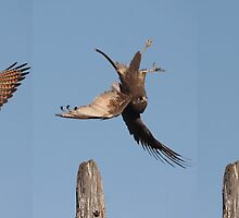 Falcon Backflip Sequence by Phillip Weyers
