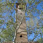 Tlaquepaque Tower  by Robert Meyers-Lussier
