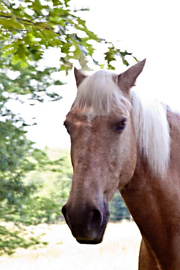 The Horse Next Door by Sherry Hallemeier