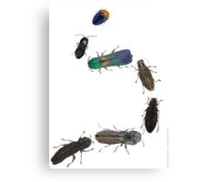 Jewel Beetle Parade Canvas Print