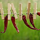 sun dried red hot chili peppers by Gregoria  Gregoriou Crowe