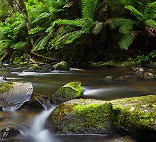 Hopetoun Falls, Otways, Great Ocean Road, Australia by Michael Boniwell