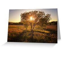 Tree 'O' Gold Greeting Card
