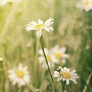 Daisy Wild by KBritt