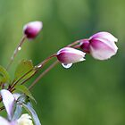 Delicate little buds  by Joyce Knorz