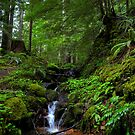 Follow The Path by Charles & Patricia   Harkins ~ Picture Oregon