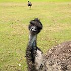 Emu (disambiguation) II by Kristy  Dorris
