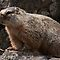 Meet Mr. Marmot by Ken McElroy