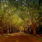 Ancient Trees by Teresa Zieba