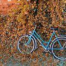 Blue Bike by Teresa Zieba