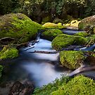 Omanawa river run moss rocks by Ken Wright