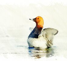Flipping Pochard by kolorpalette