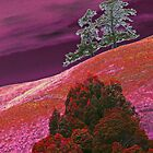 Red Hill Pines by Graeme Bayley