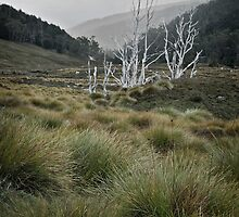 Dead Trees and Button Grass by amko